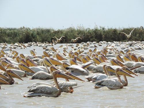 주지국립조류공원(Djoudj National Bird Park)